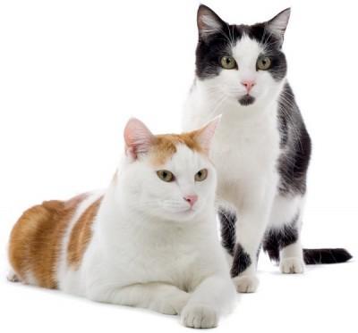 Egy-lakasban-a-macskaval