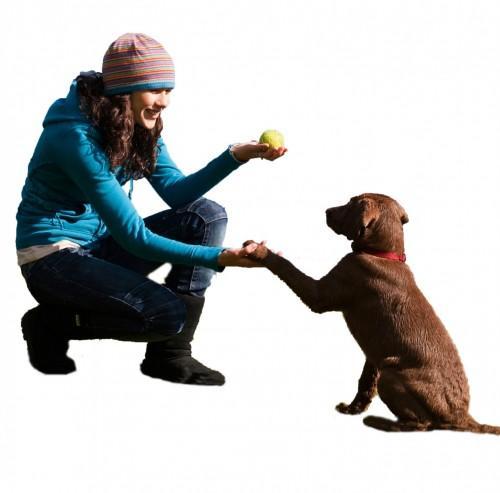 Kutyak-orokbefogadasa