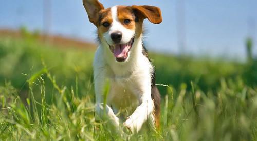 Miert-fontos-a-kutyak-szamara-a-mozgas