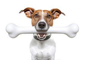 Adjunk-e-kutyanknak-csontot