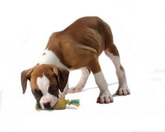A-szajhigieniarol--kutyusoknak-es-gazdiknak